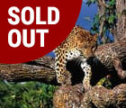 South Africa June 2018 leopard_soldout